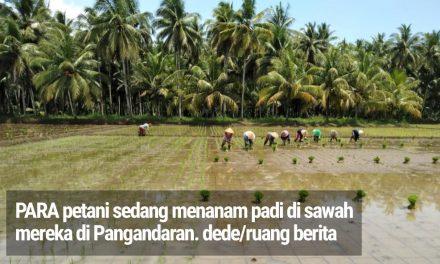 Ada Perda, Lahan Pertanian di Pangandaran Diklaim Tak Akan Berkurang Hingga 7 Turunan