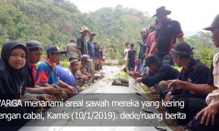 10 Hektare Sawah Kering di Pangandaran Ditanami Cabai