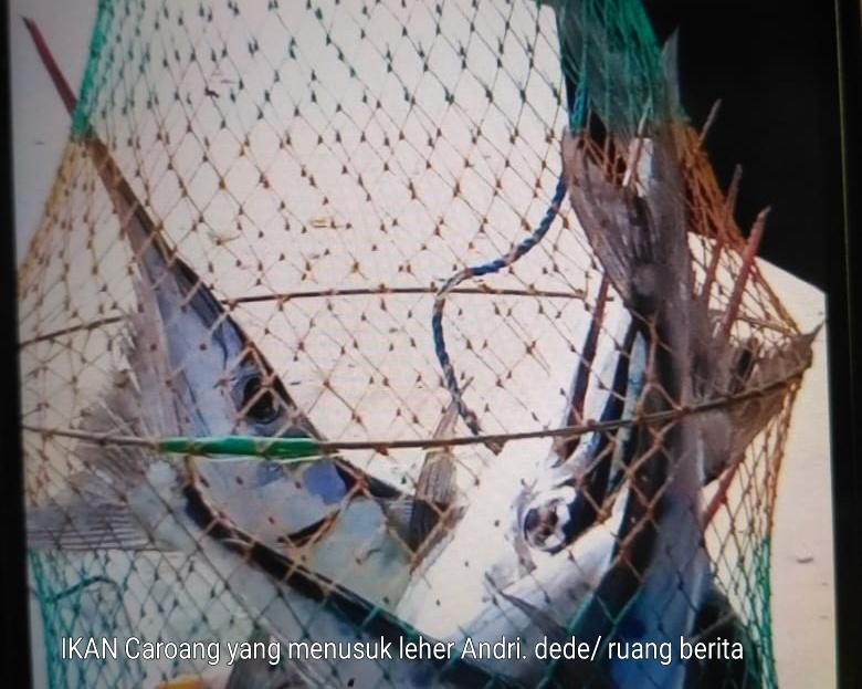 Peka Cahaya, Ikan Caroang Tusuk Leher Nelayan di Pangandaran Hingga Tewas