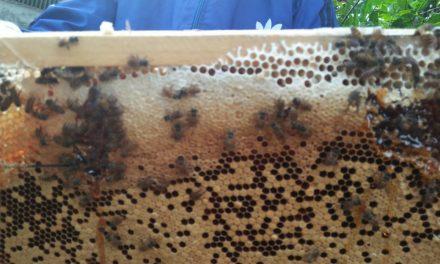 Mudah dan Menjanjikan, Guru SD di Pangandaran Ajak Ternak Lebah Madu