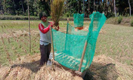 Produksi Padi Gogo di Pangandaran Capai 2.371 Ton