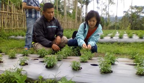 Petani di Indonesia Terus Berkurang, GEC: Siapa yang Akan Menyiapkan Pangan Nanti?