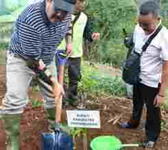 Akibat Pembalakan Liar, 13 Hektare Hutan Pangandaran Kritis