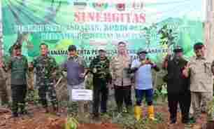 Lahan Eks Pembalakan Liar di Pangandaran Kembali Ditanami Ribuan Pohon