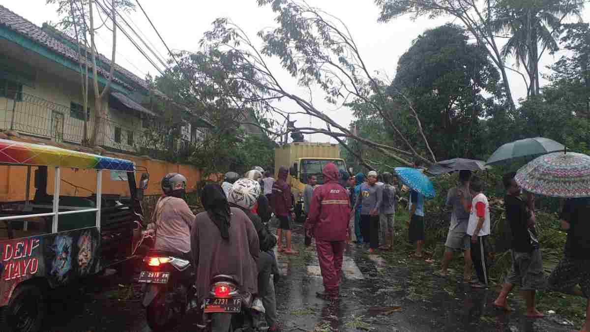 Pohon tumbang dk Tasikmalaya