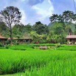 Sawah Segar Sentul, wisata kuliner dengan pemandangan alam